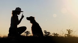 The Principles of Dog Training